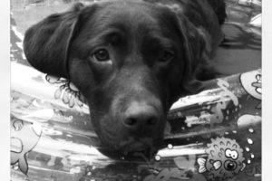 mijn hond